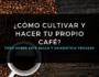 cómo cultivar y hacer tu propio café