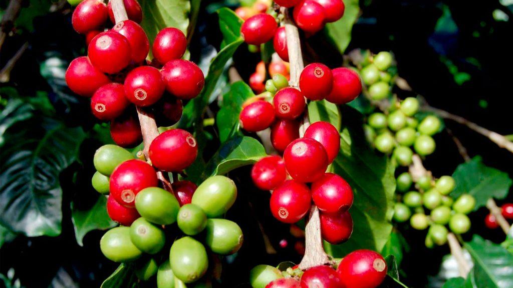 Fábrica de café_1